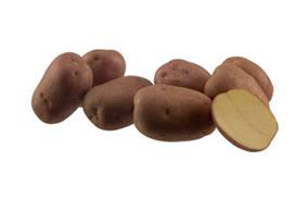 Kuroda potato minituber