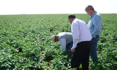 potato field experts