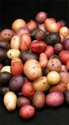 potato seeds classification