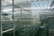 potato microplant culture rack