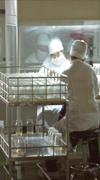 potato minituber production