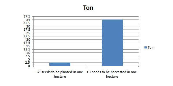 potato g1 seed yield