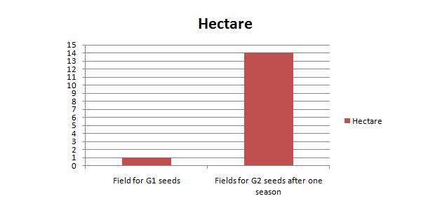 potato g2 seed yield