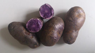 purple potato tuber