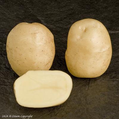 Sante potato minituber